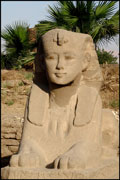 Sphinx from the Avenue of Sphinxes, Luxor Temple